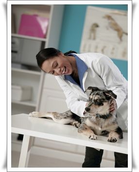 Veterinary-Nurse